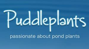 Puddleplants - Pond Plants