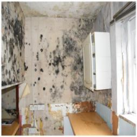 Mould Control Systems in Burnley