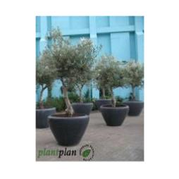 Exterior plants from Plant Plan