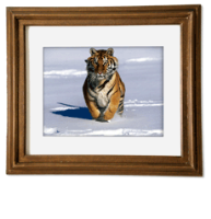 Quality Printed and Framed Photo Canvases
