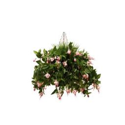 Large Fuchsia Hanging Basket in Cream