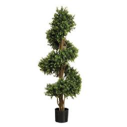 Buxus Spiral Outdoor Plant