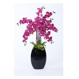 Cerise Orchid Display