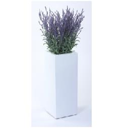 Lavender in Tall White Fibreglass Cube Planter