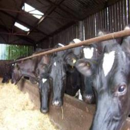 Effective Nutritional Solutions for Livestock
